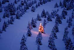 Z S Christmas Tree Farm Unofficial Waconia Minnesota